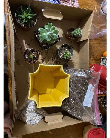Succulent kit Custom product