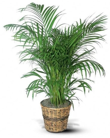Palm Plant Flower Arrangement