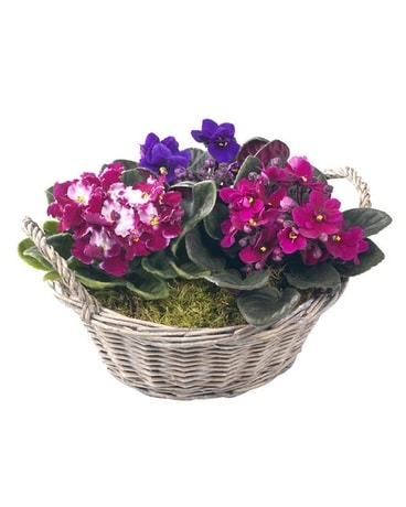 Violet Garden Flower Arrangement
