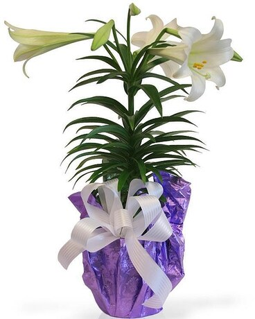 Blooming Easter Lily Flower Arrangement