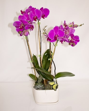 Amethyst Orchids Flower Arrangement