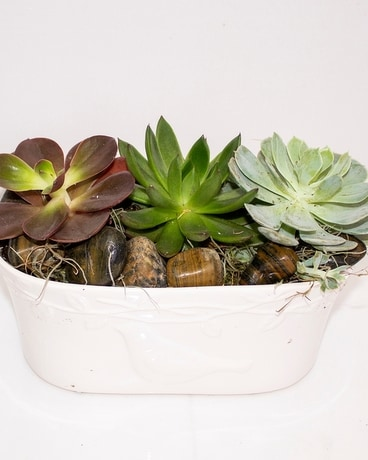 Dove Planter Succulents Plant