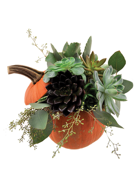 Succulent Pumpkin Flower Arrangement