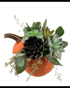 Succulents and Terrariums Delivery Cincinnati OH - Jones the