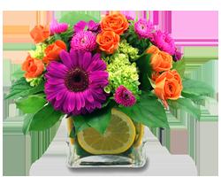 Vibrant Blossoms
