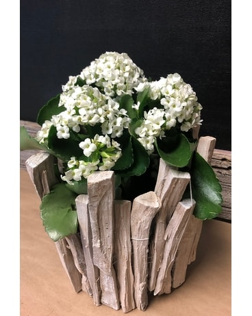 Drift Wood Basket Flower Arrangement