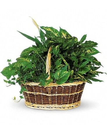 Large Basket Garden - by Galbraith Florist Flower Arrangement