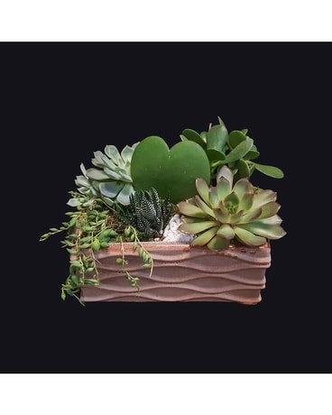 Sarasota Wave Succulent Garden Flower Arrangement