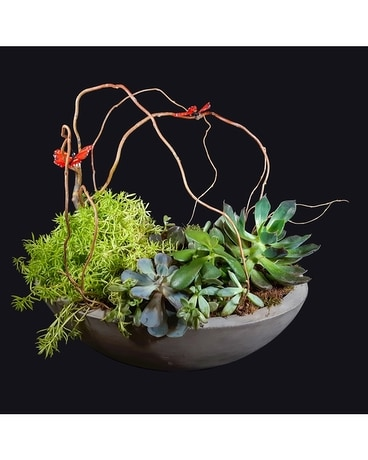 Newport Succulent Garden Flower Arrangement