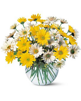 Dashing Daisies Flower Arrangement