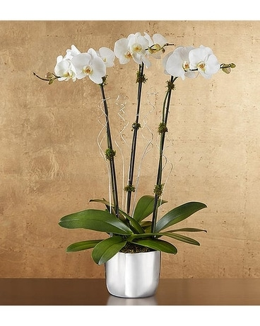 Celebration Orchids Flower Arrangement