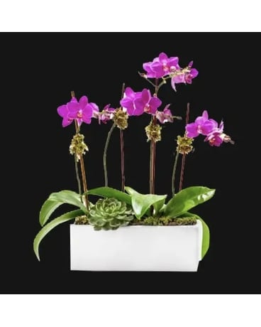 Orchid Lover Flower Arrangement