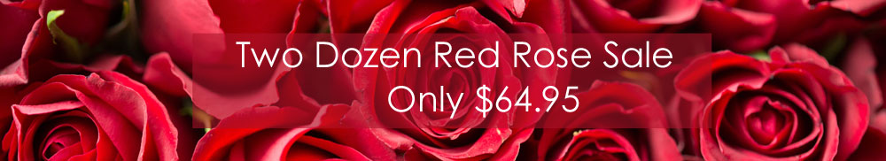 Two Dozen Red Rose Sale