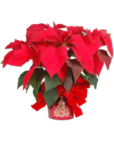 Red Poinsettia in a Sparkle Tree Pot Flower Arrangement