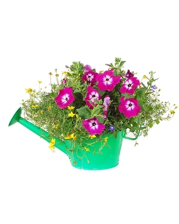Watering Can Planter Plant