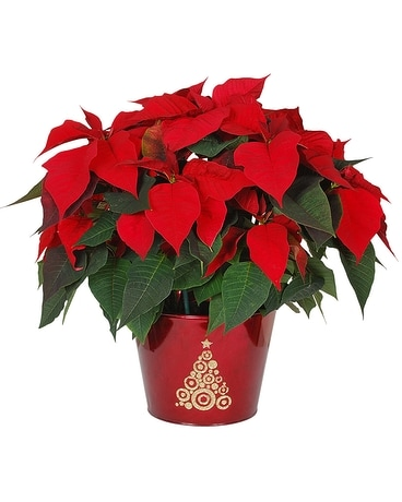 Red Poinsettia in a Sparkle Tree Pot