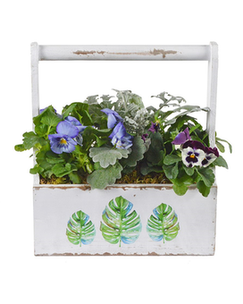Flowering Planter Dish Garden Plant