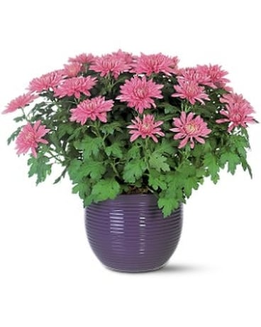 Lavender Chrysanthemum Flower Arrangement
