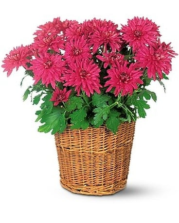 Purple Chrysanthemum Flower Arrangement