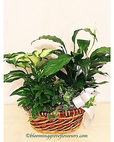 BGF3011 Flower Arrangement