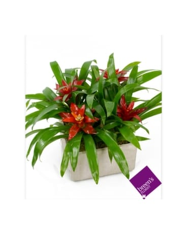 Tropical Rainforest Flower Arrangement