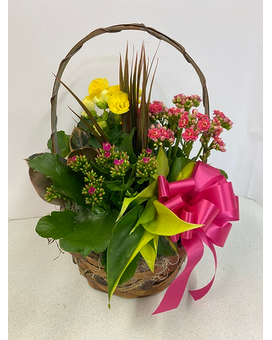 Blooming Dish Garden Flower Arrangement