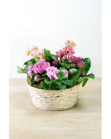 Beautiful Blooms Basket Plant