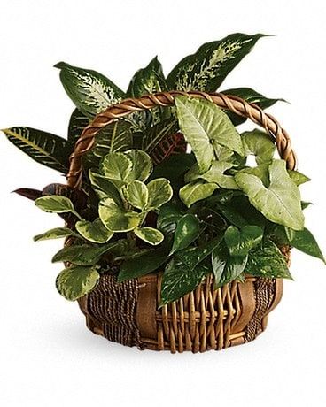 Emerald Garden Basket Flower Arrangement