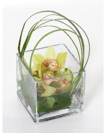 Orchid Mini Cube Flower Arrangement