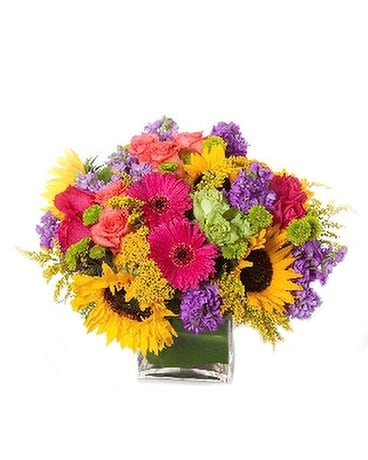 St. Vrain Splash Flower Arrangement