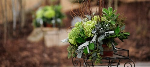 Unique floral and plant gifts for customers and employees from Fort Collings & Loveland's best local flowers shop.