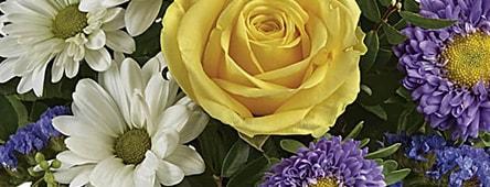 Easter Flowers & Roses Santa Monica