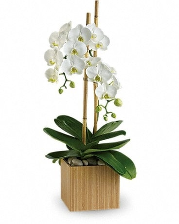Opulent Orchids Flower Arrangement