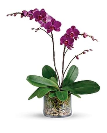 Glorious Gratitude Orchid Flower Arrangement