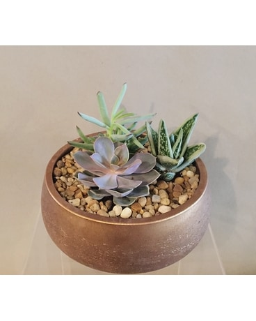 Succulents - Metallic Plant