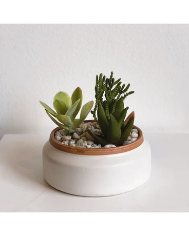 Mini Succulent Garden Flower Arrangement