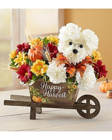 Fall Harvest Dog Flower Arrangement