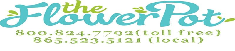 The Flower Pot  sc 1 th 105 & Knoxville Florist - Flower Delivery by The Flower Pot