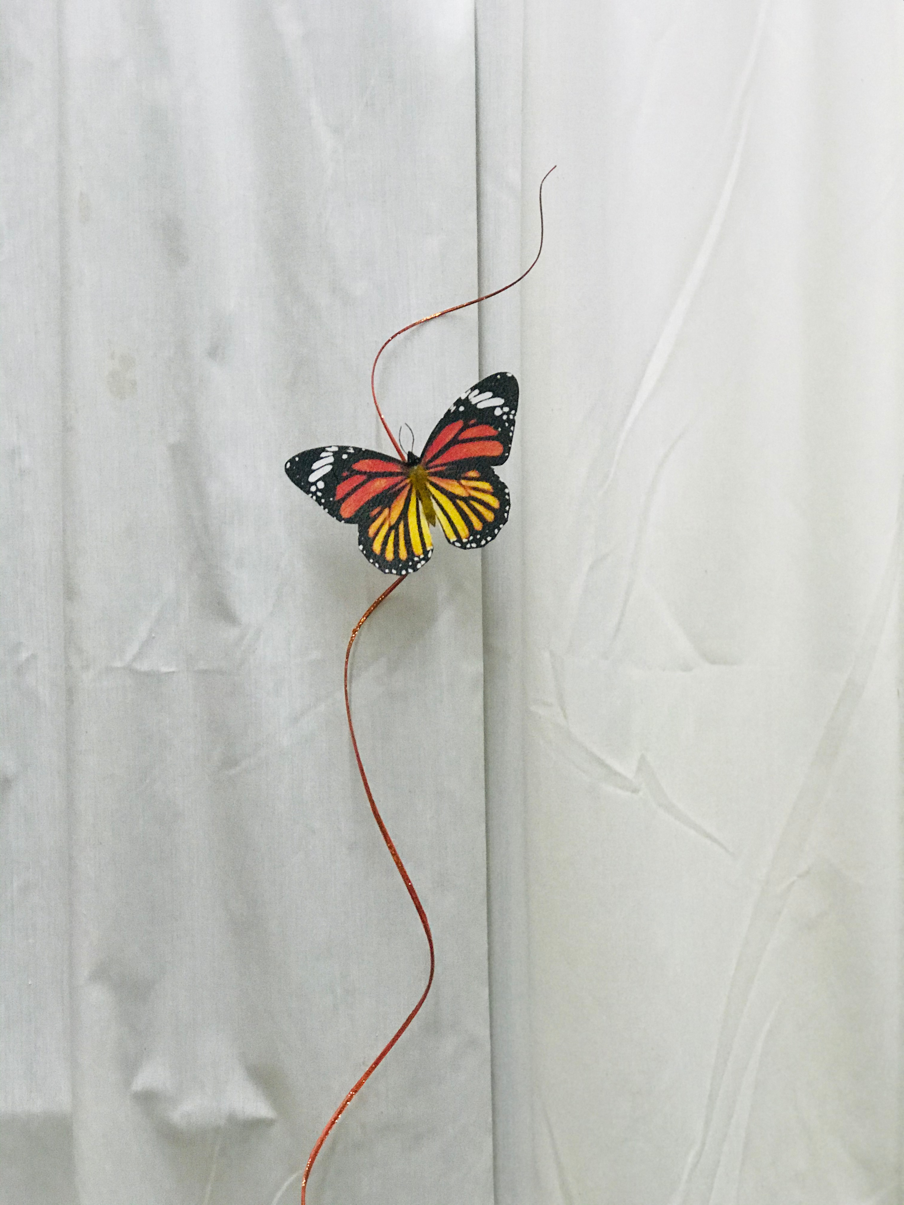 Butterfly with twig