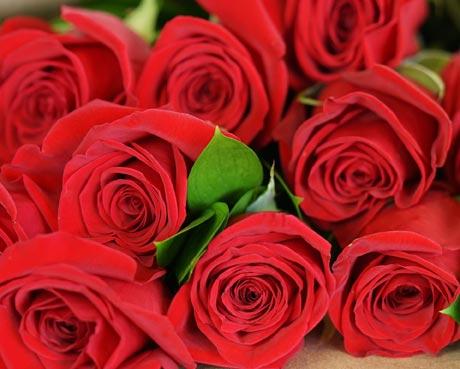 George K. Walker Roses