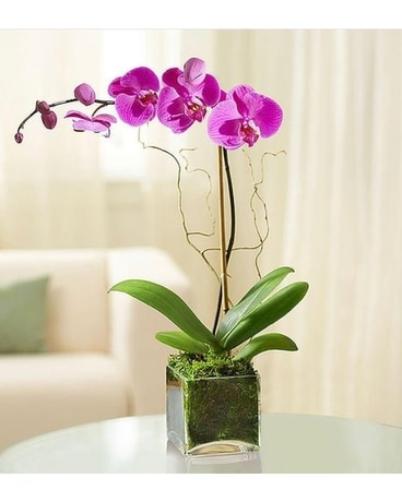 Orchid Plant Assorted Colors Flower Arrangement
