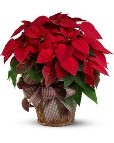 Christmas Flowers.Christmas Flowers Delivery Salem Or Olson Florist