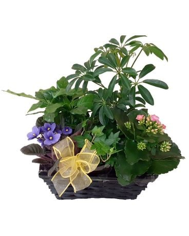 Planter Basket Plant