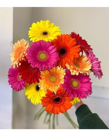 GERBERA SPECIAL Flower Arrangement