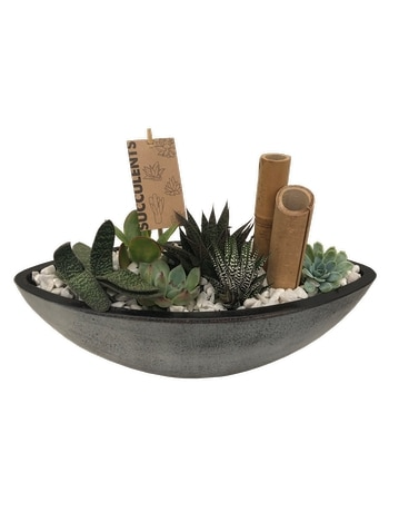 The Succulent Boat Plant