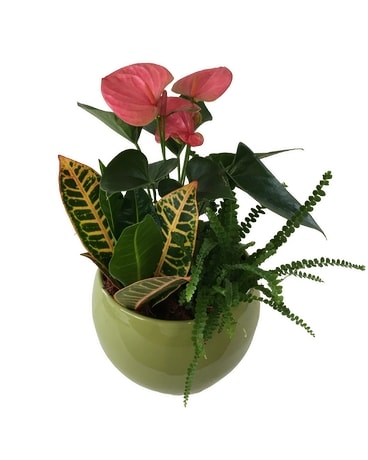 Round Anthurium Planter Flower Arrangement