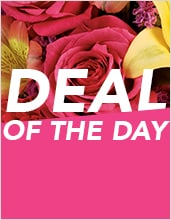 Deal of the Day- Florist Choice