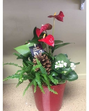 Anthurium Planter Flower Arrangement