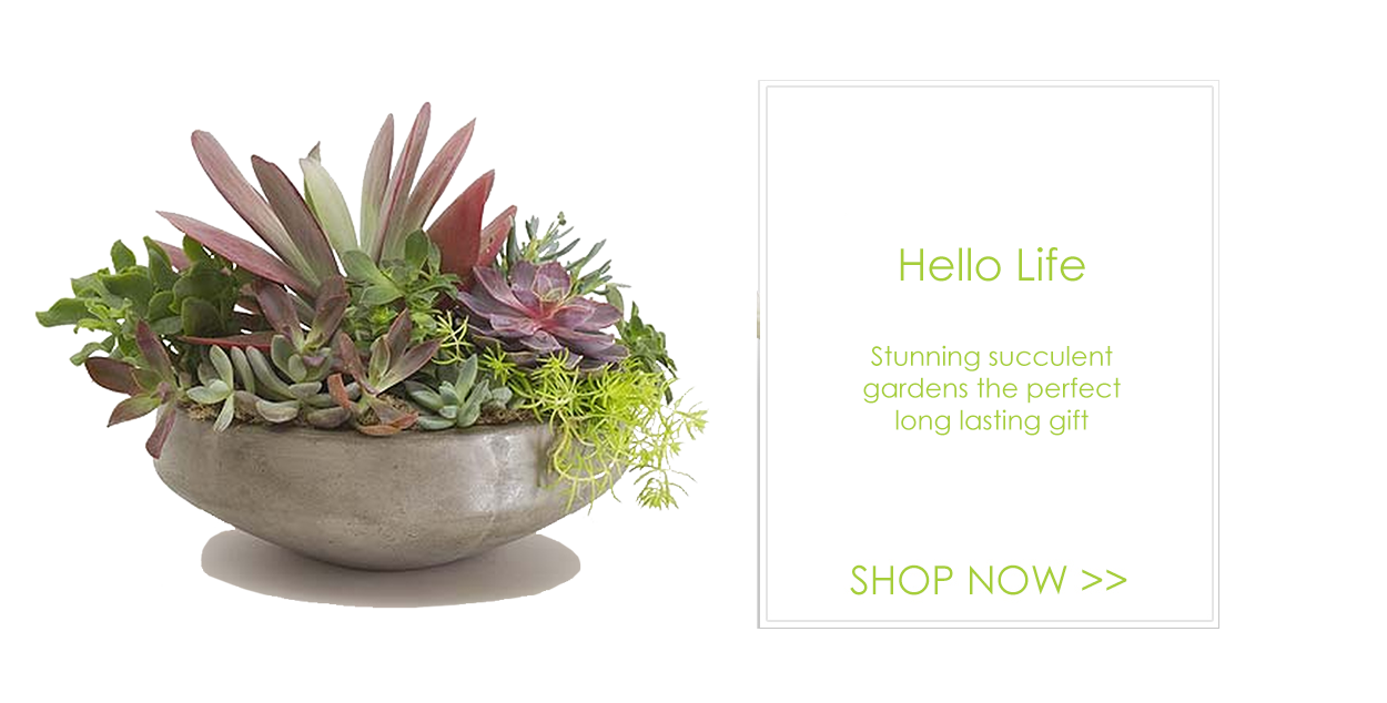 Palm Springs Florist Flower Delivery By Palm Springs Florist Inc