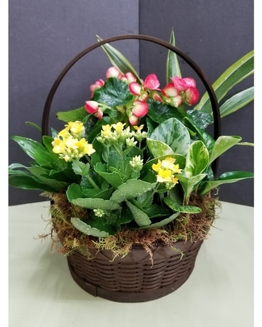 Plant and Flower Basket Flower Arrangement